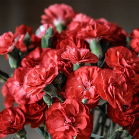 Beautiful Carnations